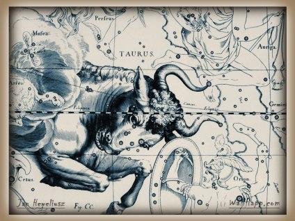 Bulls Head hevel-taurus