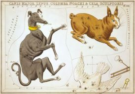 Greyhound Sidney_Hall_-_Uranias_MirrorCanis_Major